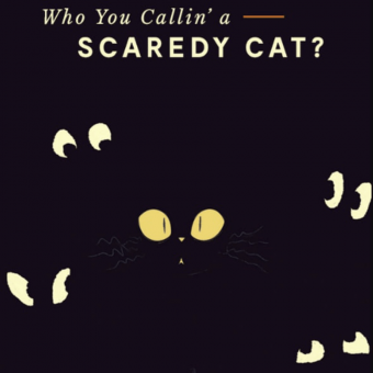 scaredy cat - one of the haloween newsletter examples
